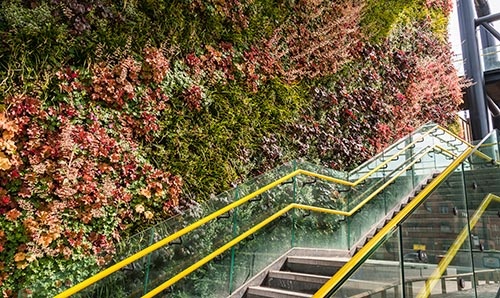 Green, flowery wall and steps